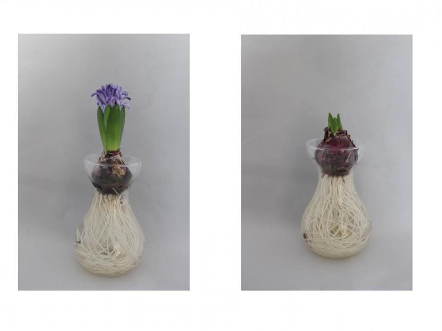 Potjes hyacint